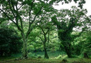 伊豆高原 フォトウェディング 一碧湖